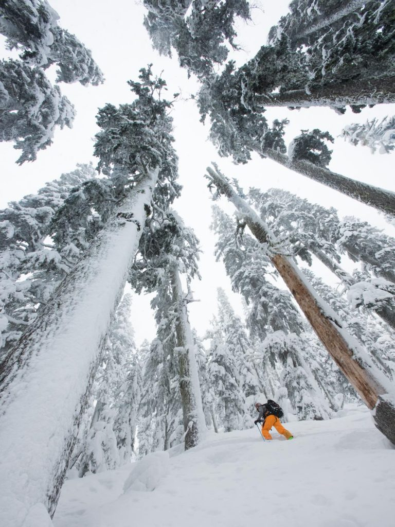 Big snowpack, bigger trees. Another pow day in Squamish, BC. Pat Mulrooney photo.